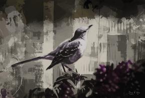 Mauve Mockingbird