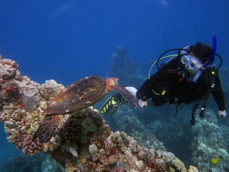 maui new years_sea turtle karen eyegazin