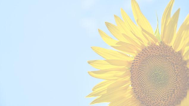 sunflower-3616249_1920_edited.jpg