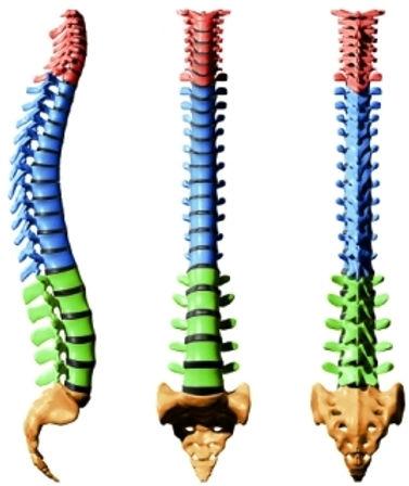 Исцеление позвоночника: лечение остеохондроза, протрузии, межпозвоночной грыжи, межреберной нервалгии. Снятие боли в поясницы, между лопаток и в шеи. Безопасно, эффективно, быстро и легко на любом расстоянии. Центр энергетических и духовных практик Целитея Гордея.
