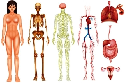 Профессиональный подход в целительстве дающий исцеление от болезней, который базируется на медицинских и научных знания анатомии полученных в университете, а также восточной философии о энергетическом строении человека