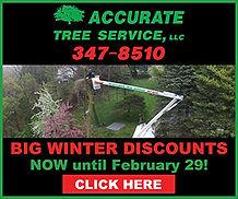 Accurate Tree Web Banner 300 x 250.jpg