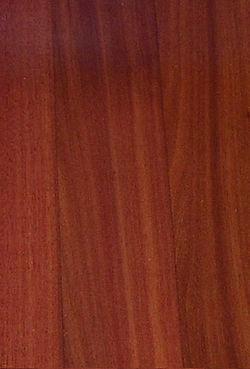 perruvian cherry.jpg