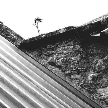 TWO ROOFS AND A ROSE by Neil Griffin