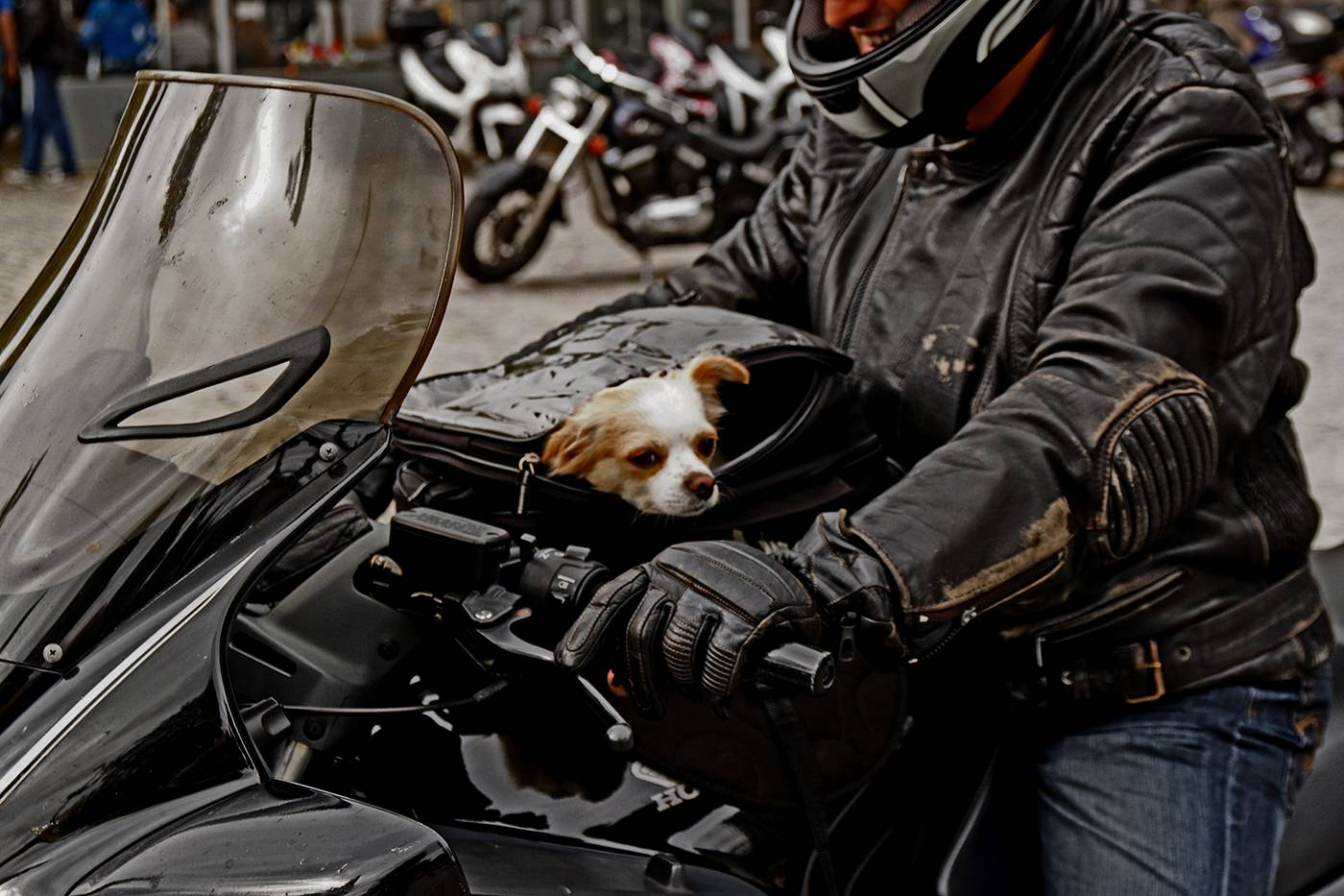 GOING FOR A RIDE by Ray Mengham.jpg