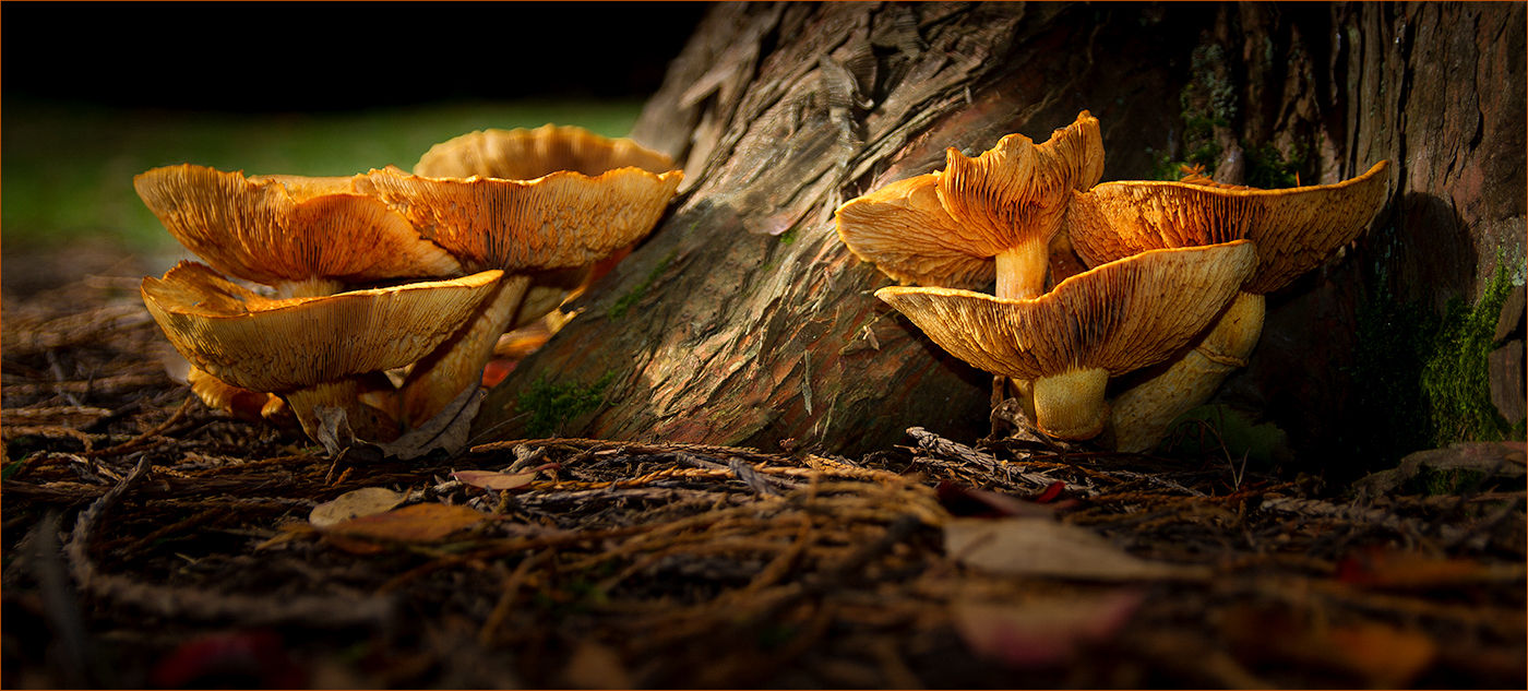 CAUGHT IN THE LIGHT by Peter Morrish