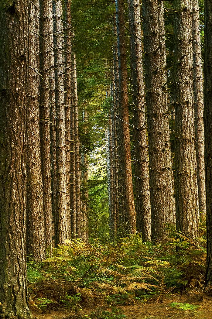 PINE TREE ALLEY by Gary Scorgie.jpg