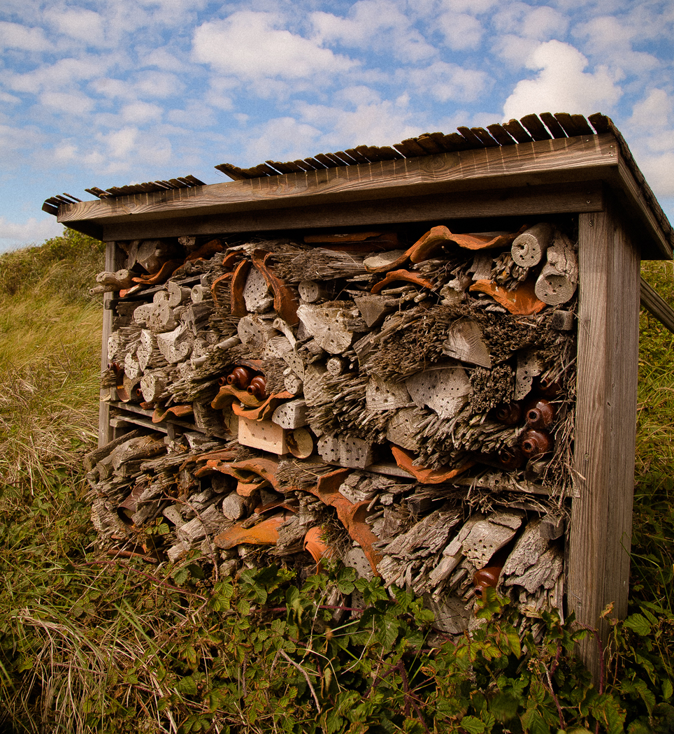 WILD INSECTS HOUSE by Harvey Whittam