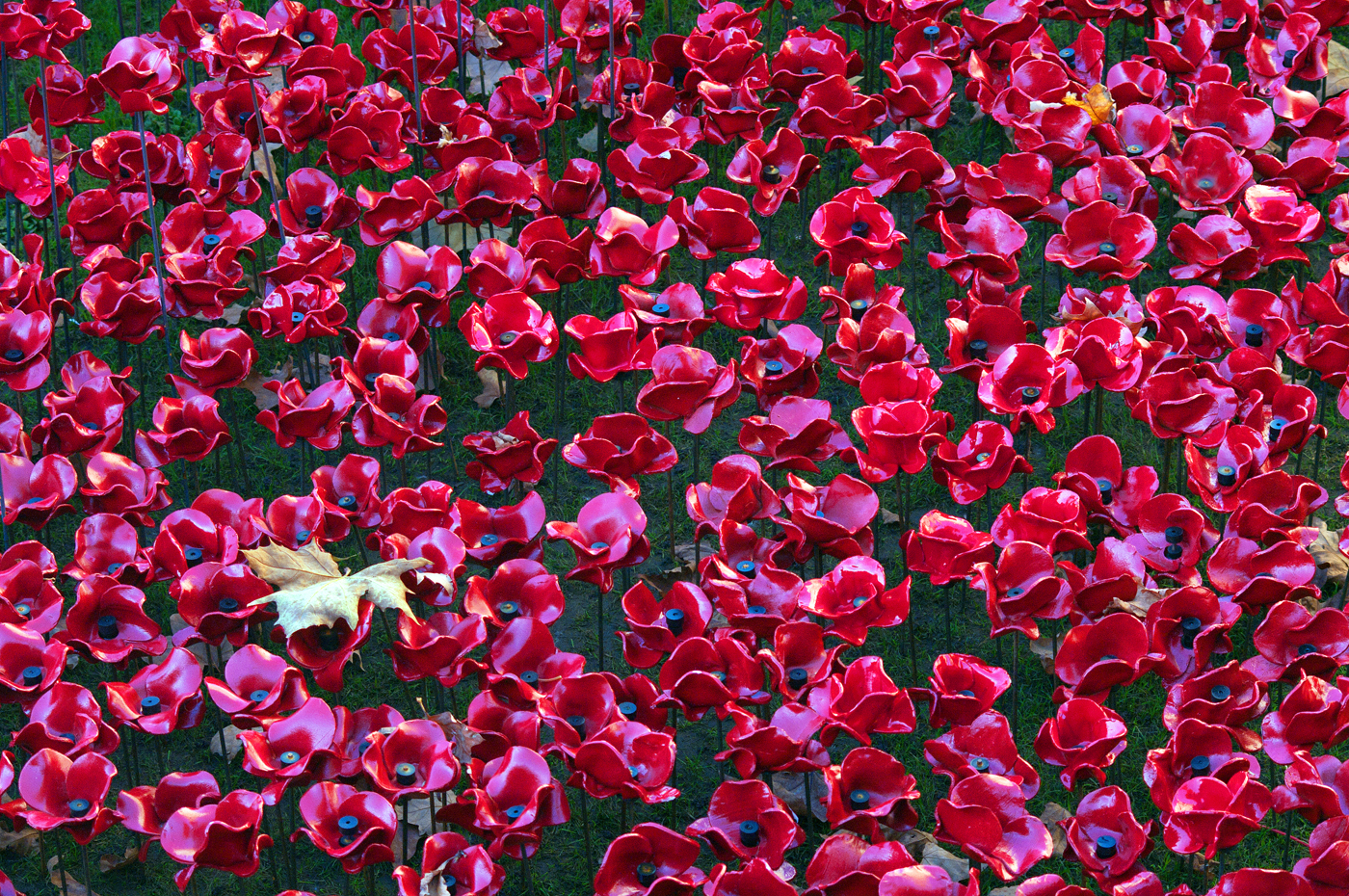 LEST WE FORGET by Terry Cork