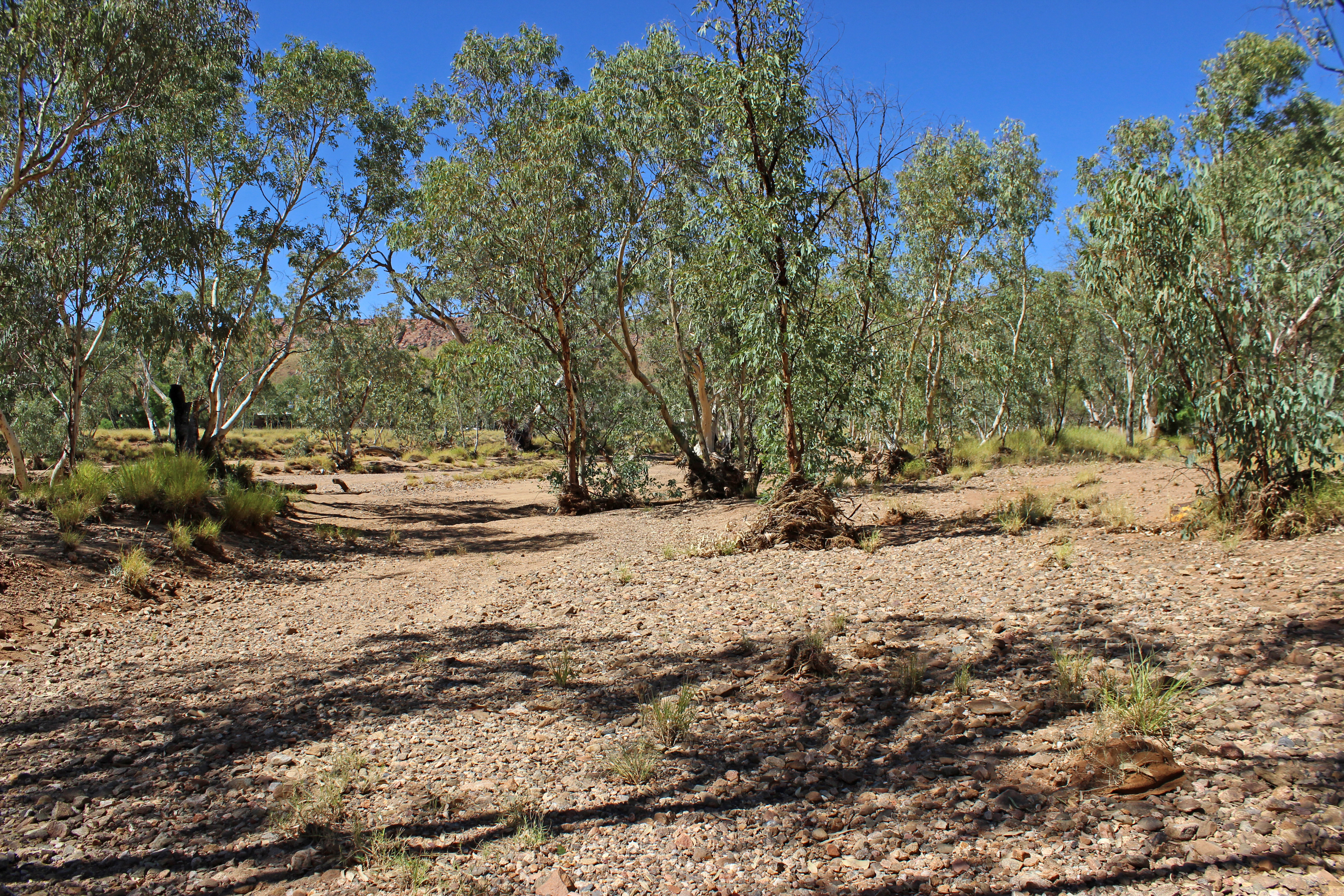 THE TODD RIVER ALICE SPRINGS by Sue Avey