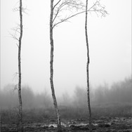 BLEAK COMMON by Andy Smith.jpg