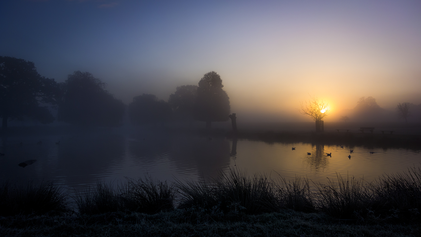 DAWN AT BUSHY PARK by Paul Langford.jpg