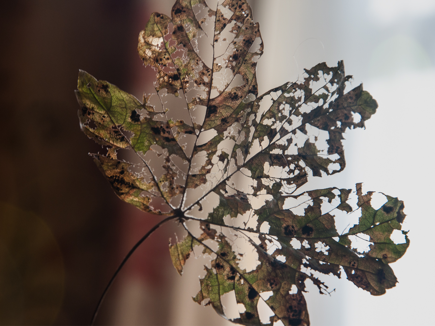 LEAF-LACE by MaryLou-Winters.jpg