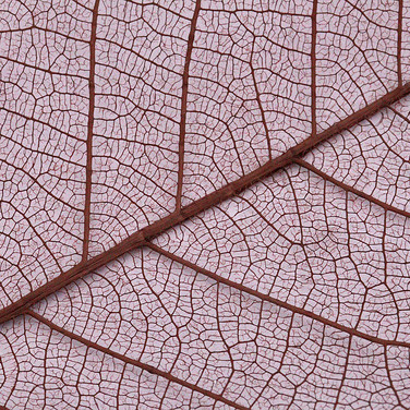 LEAF VEIN STRUCTURE by Keith Webb