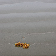 RECEDING TIDE AND SEAWEED by Neil Griffi