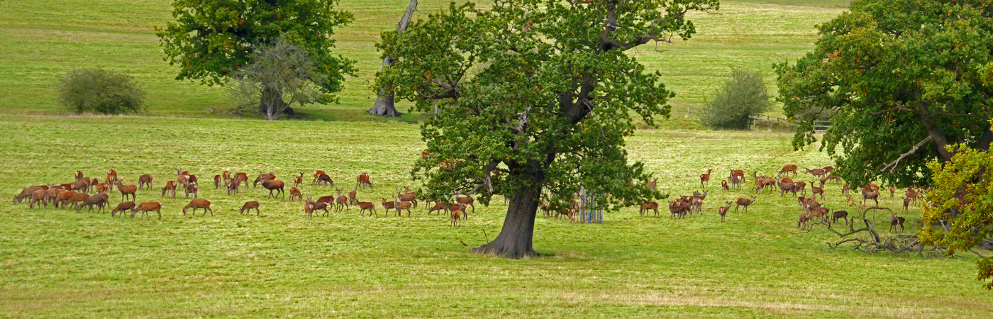 WINDSOR GREAT PARK by Jim Chown.jpg