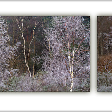 WINTER DIPTYCH by Andy Smith.jpg