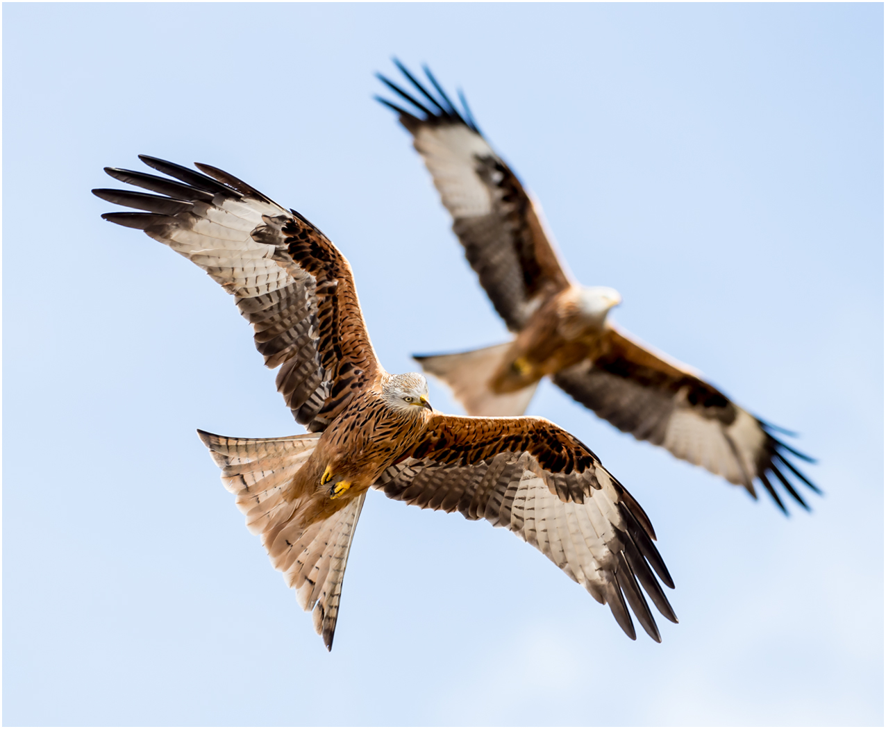 RED KITE BALLET by Jerry Lake.jpg