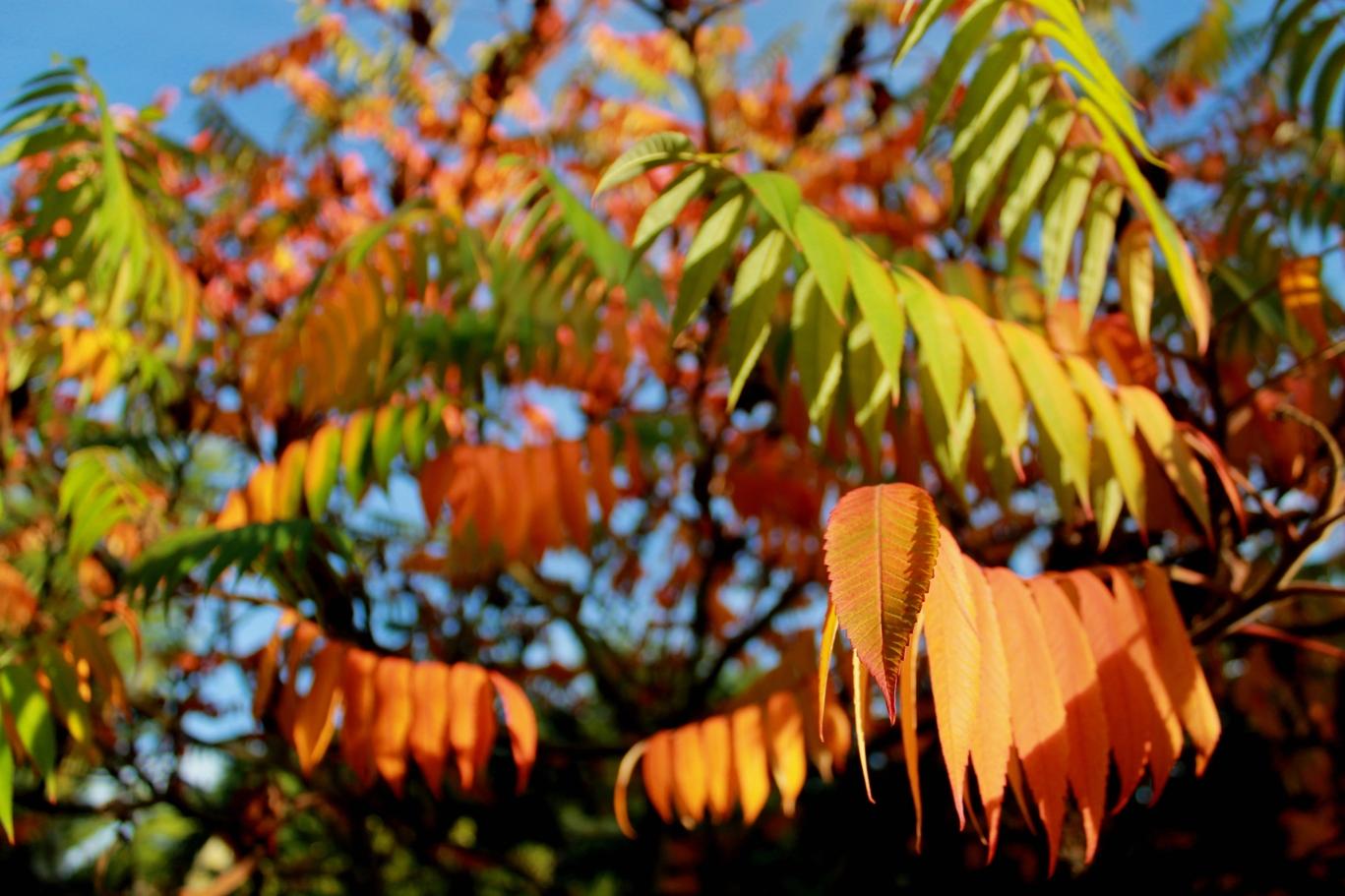 TAMARIX TREE by Deborah Wetherall.JPG