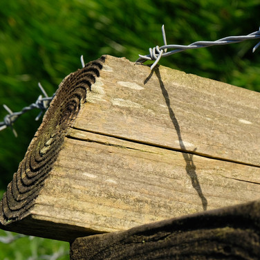 OLD WOOD AND BARBED WIRE by Bryan Fisher