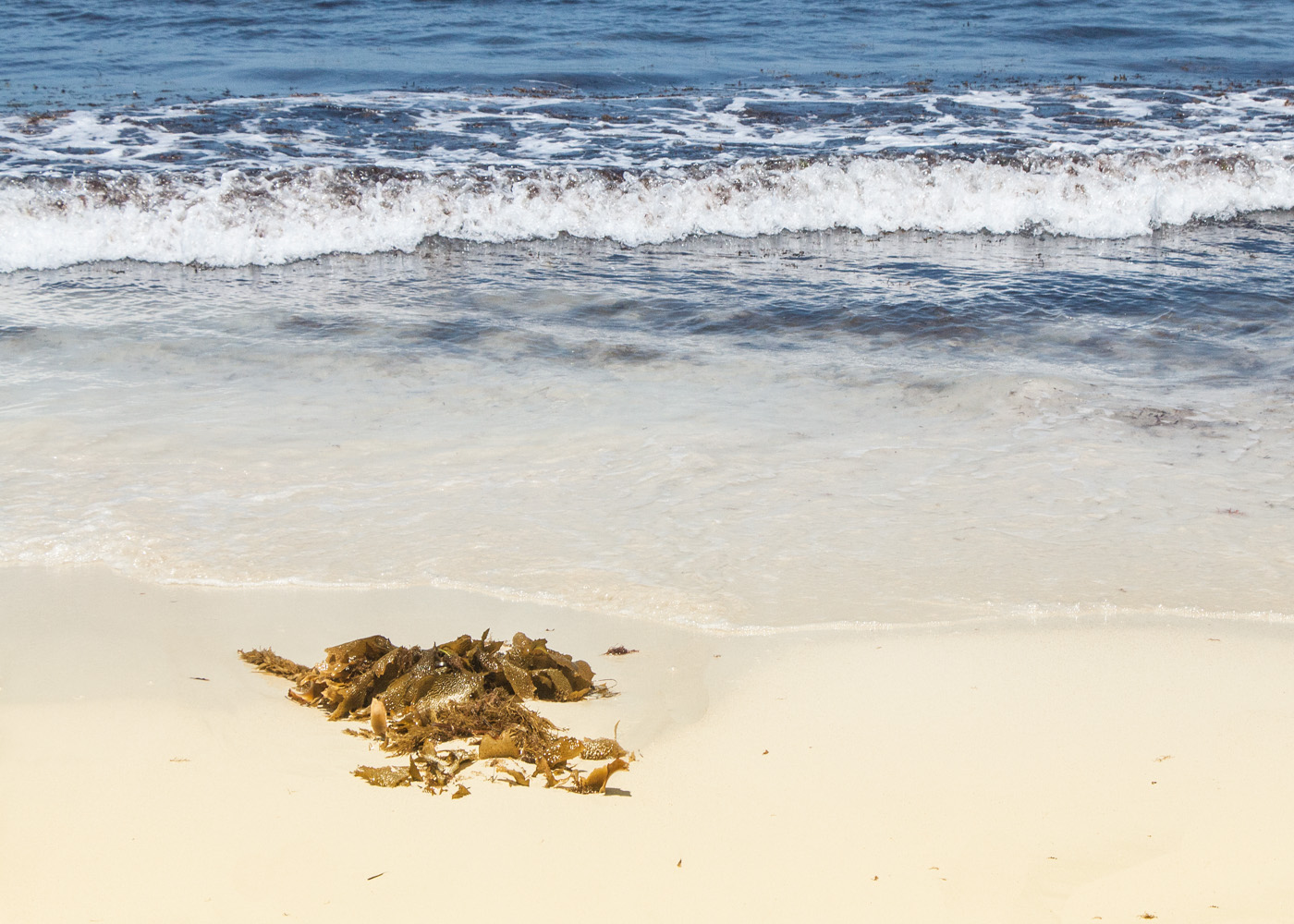 ROCKS SEAWEED by Don Dobson