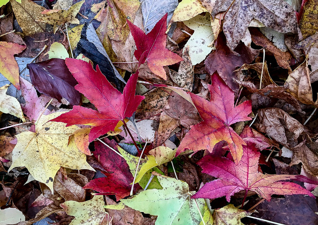 COLOURS OF AUTUMN by Annette Sissons.JPG