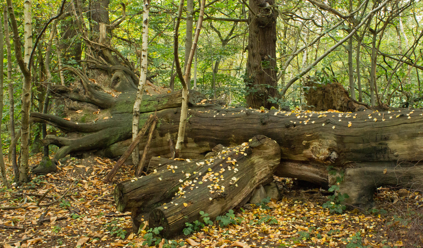 ANCIENT WOODLAND by Sue Avey.jpg