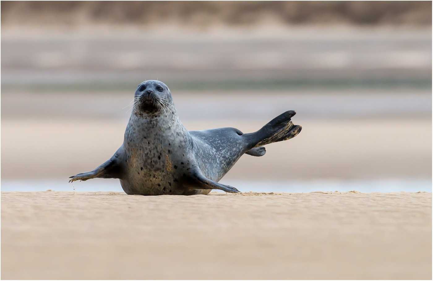 SEAL PILATES by Jerry Lake.jpg