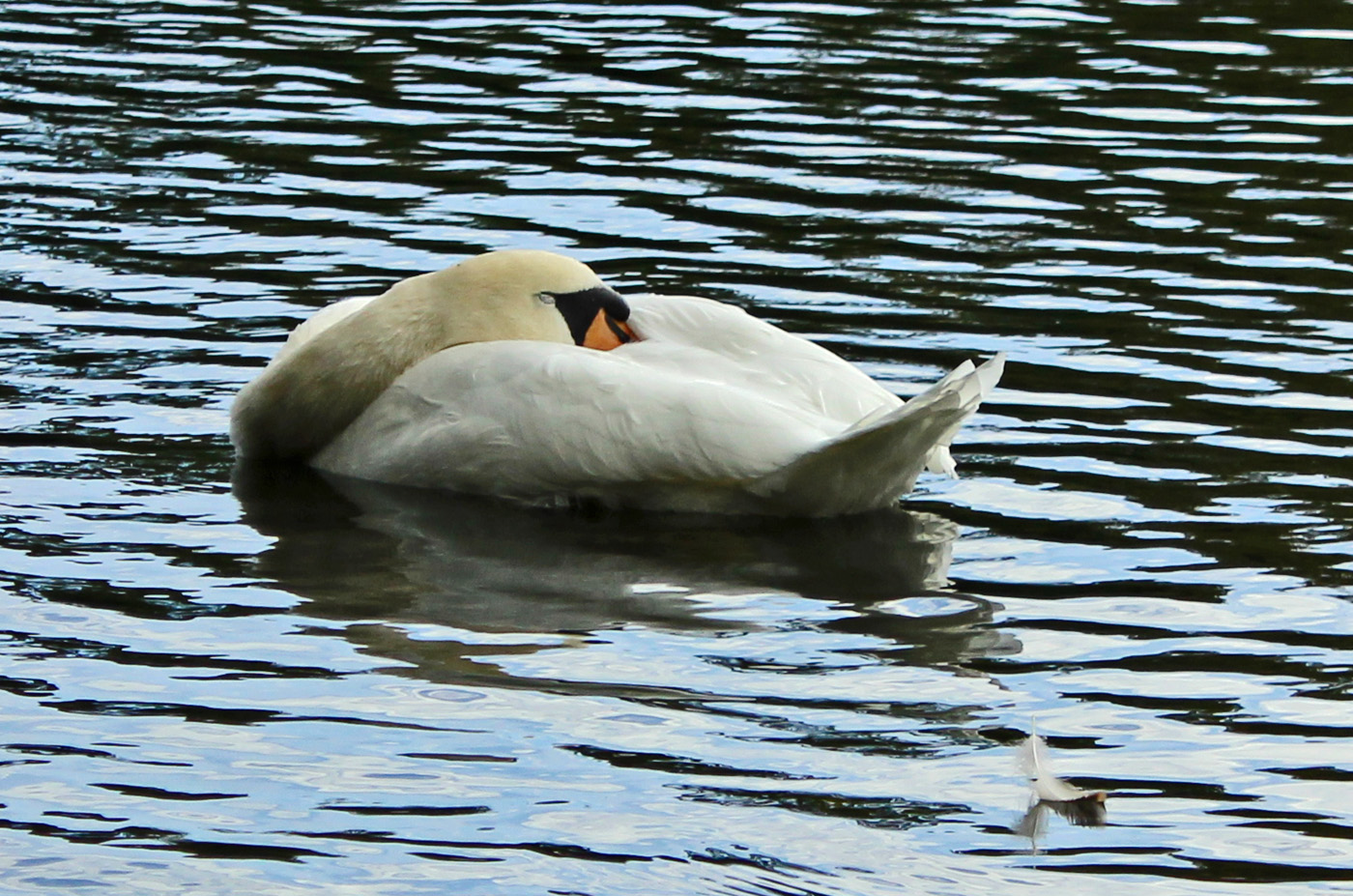 WAKE ME UP WHEN THERE IS FOOD by Sue Avey