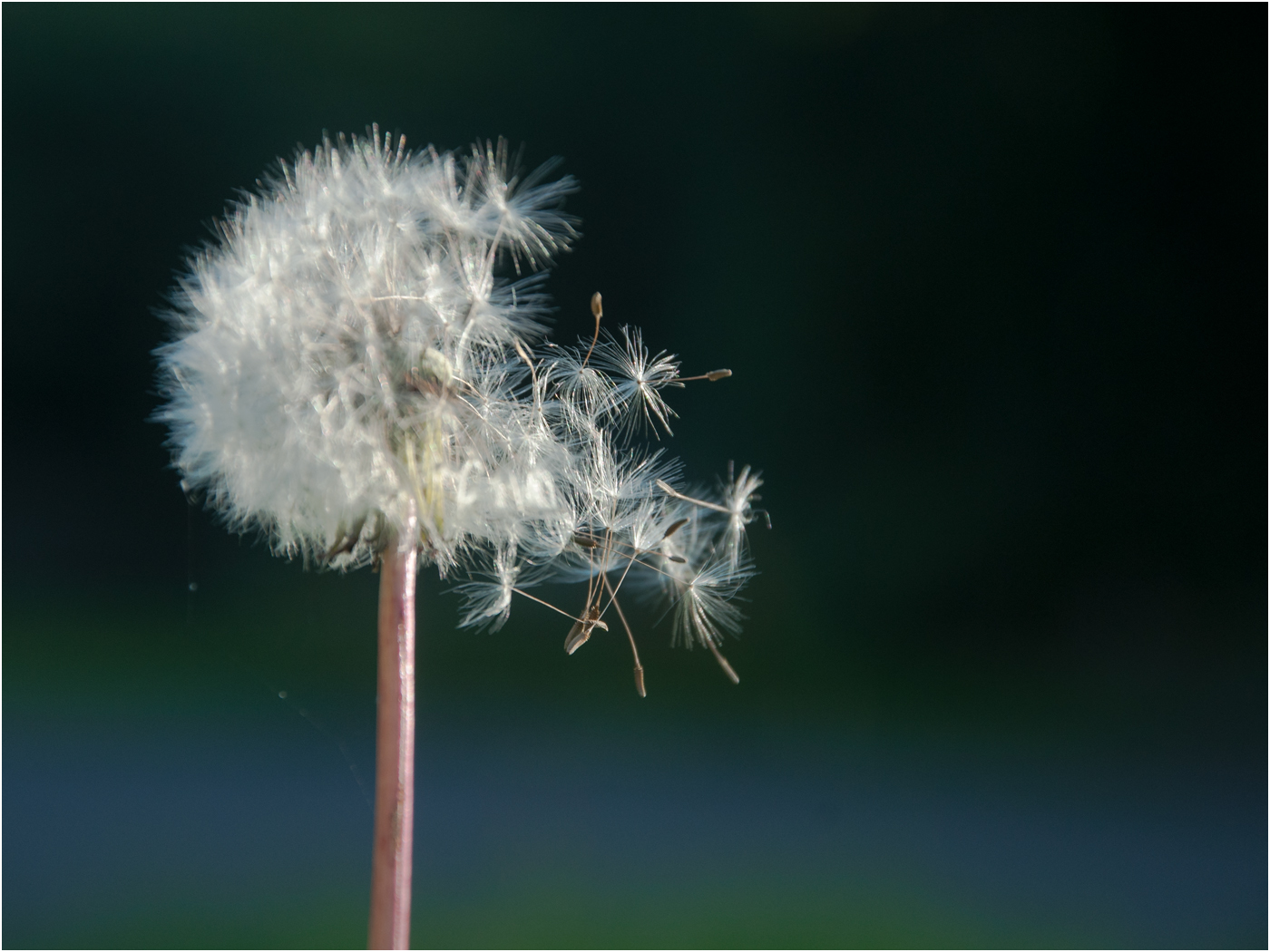 MAKE A WISH by MaryLou Winters