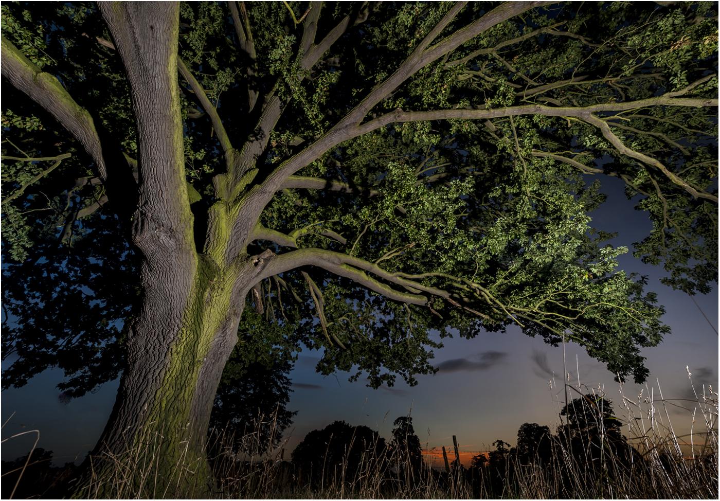 OAK TREE AT DUSK by Jerry Lake.jpg