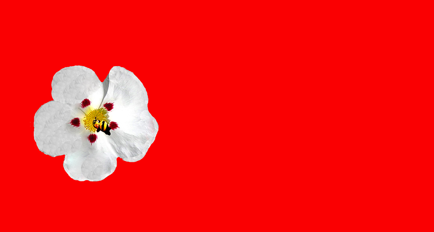 SLEEPING BEE  by DaveTaylor