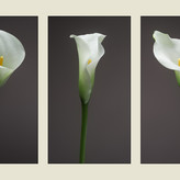 THREE LILLIES by Mark Collins.JPG