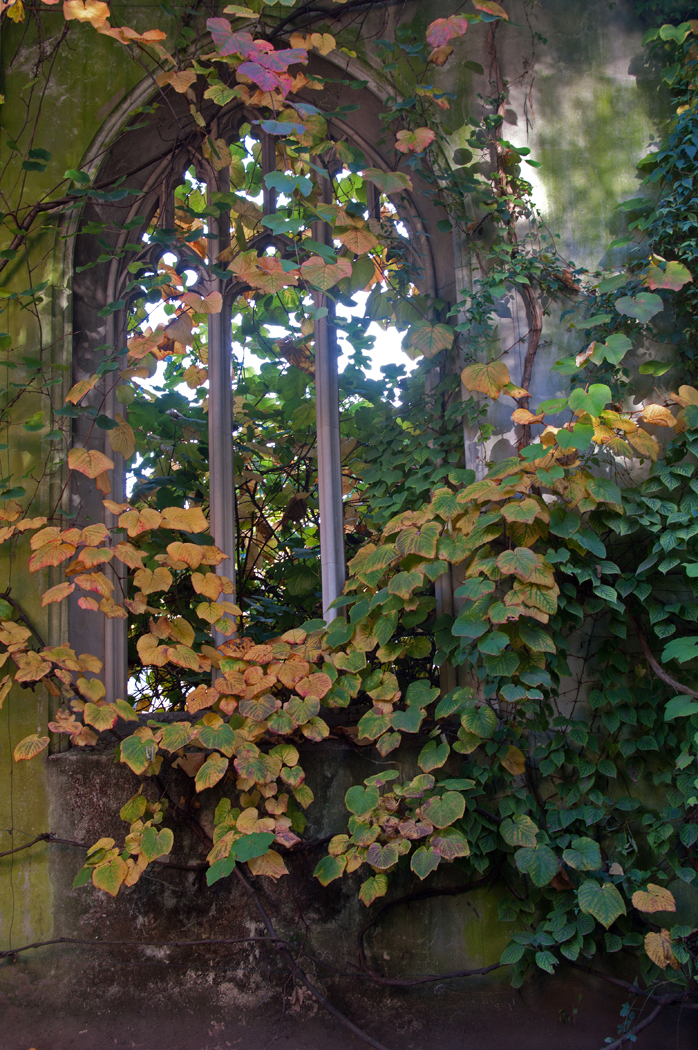 THRO THE ARCHED WINDOW by Terry Cork