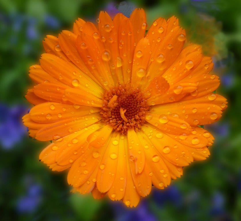 WET AND ORANGE by Jim Chown.jpg