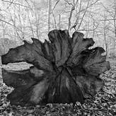 STORY OF A TREE by Bushra Sheikh.jpg