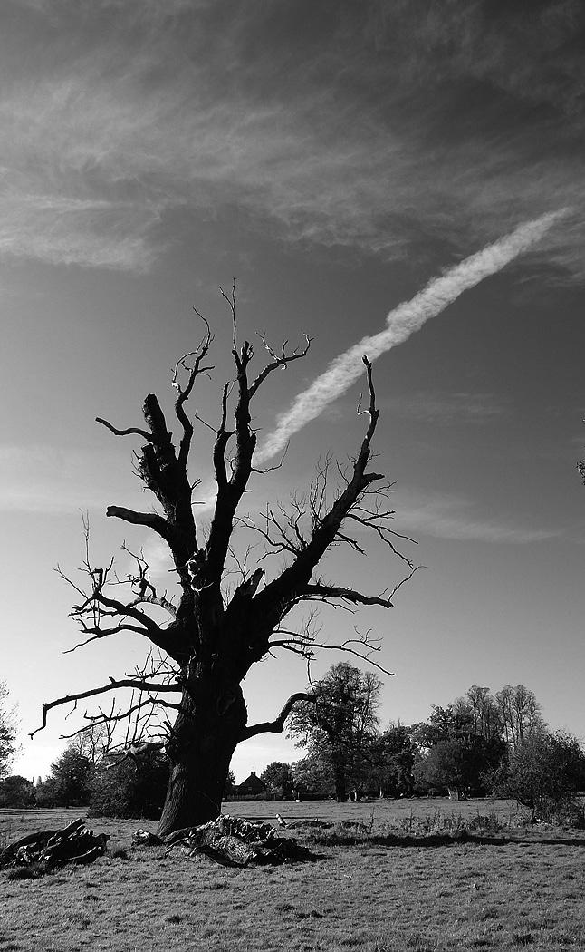 AGED TREE by John Cano-Lopez.jpg