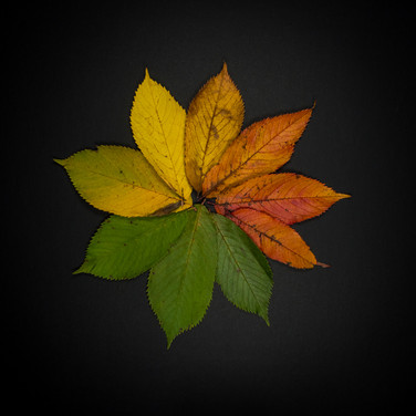AUTUMN CIRCLE by Annette Sissons
