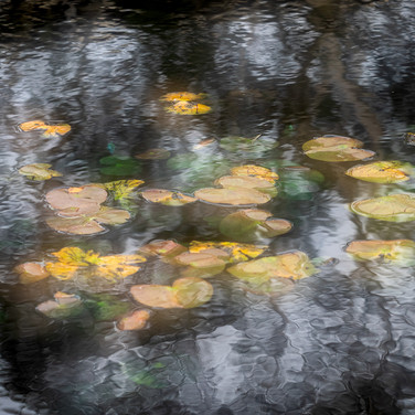 ALL ABOUT THE MONET by Mark Collins.JPG