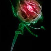 IMAGE OF A ROSE by Ken Grant.jpg