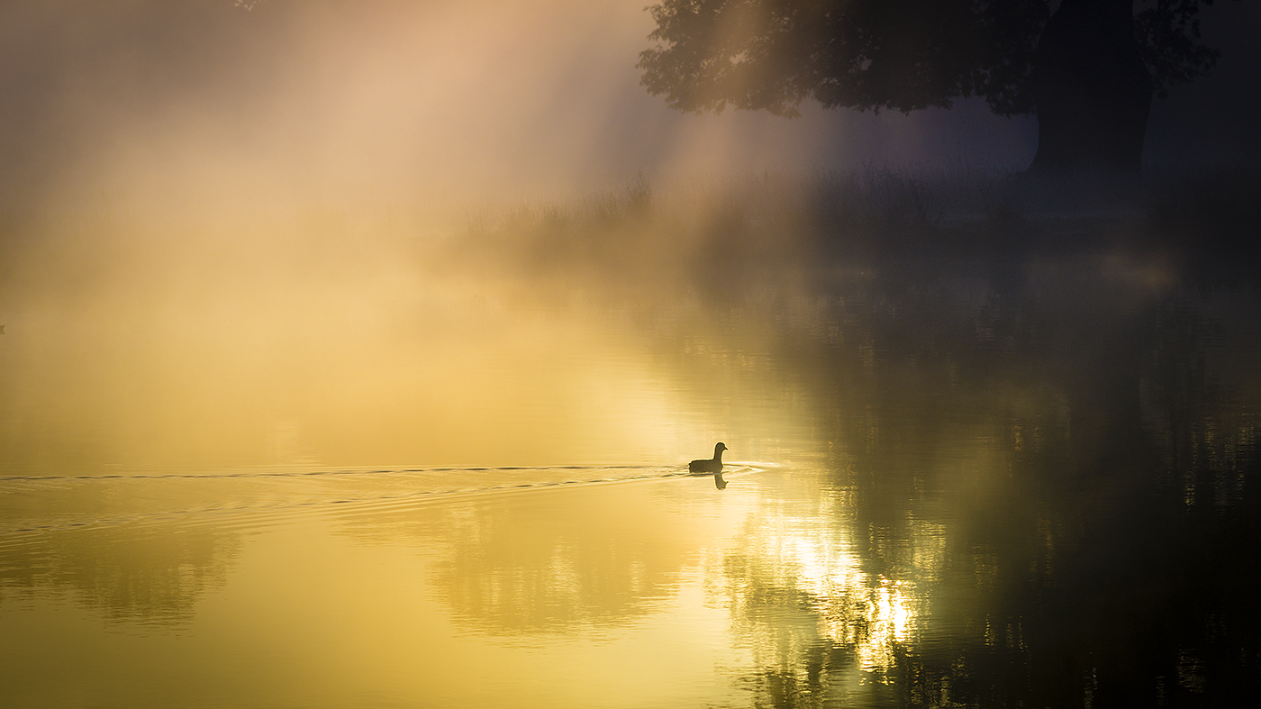 ON GOLDEN POND by Paul Langford.jpg