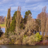 ISLAND AT BLENHEIM by Harvey Whittam.jpg