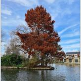 AUTUMNAL TREE by Bushra Sheikh.jpg