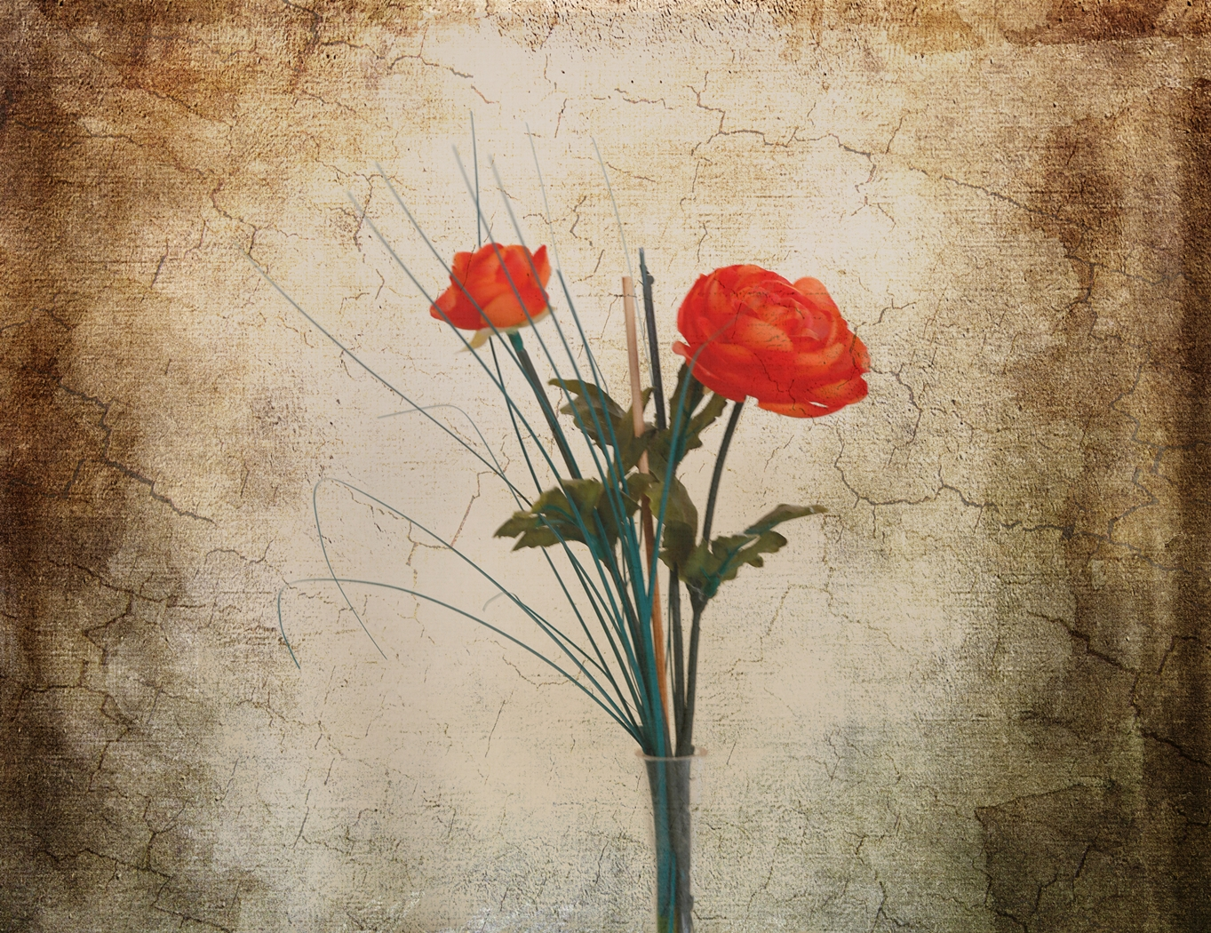 ROSE RED by Rojer Weightman