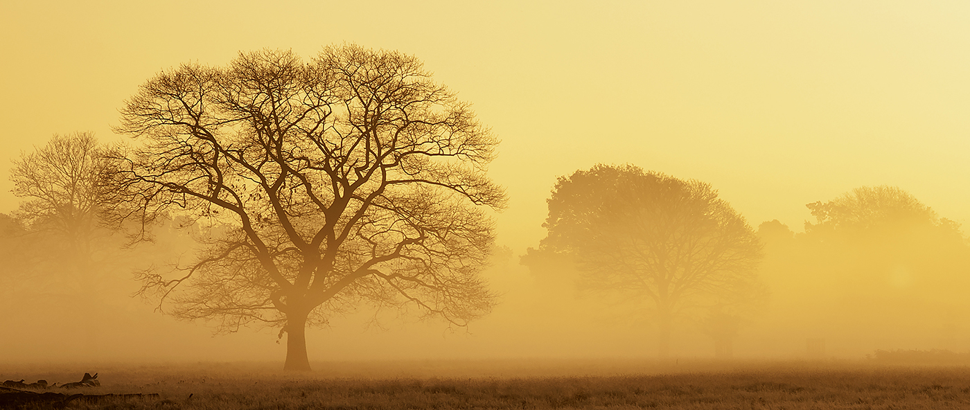 MORNING MIST by Gary Scorgie.jpg