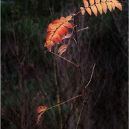 TWIG AND LEAVES by Neil Griffin .jpg