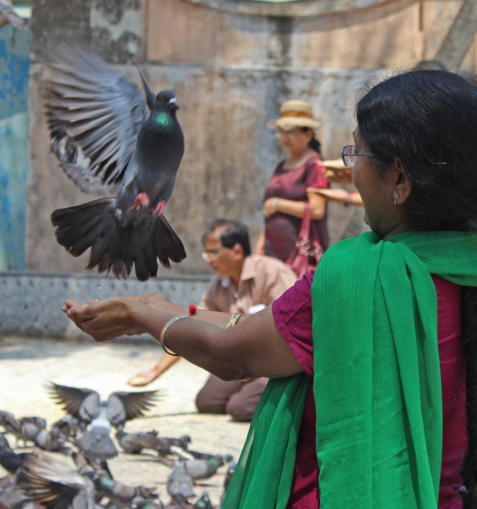 FEED THE BIRDS by Sue Avey