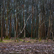 ENTICING FOREST by Andy Smith.jpg