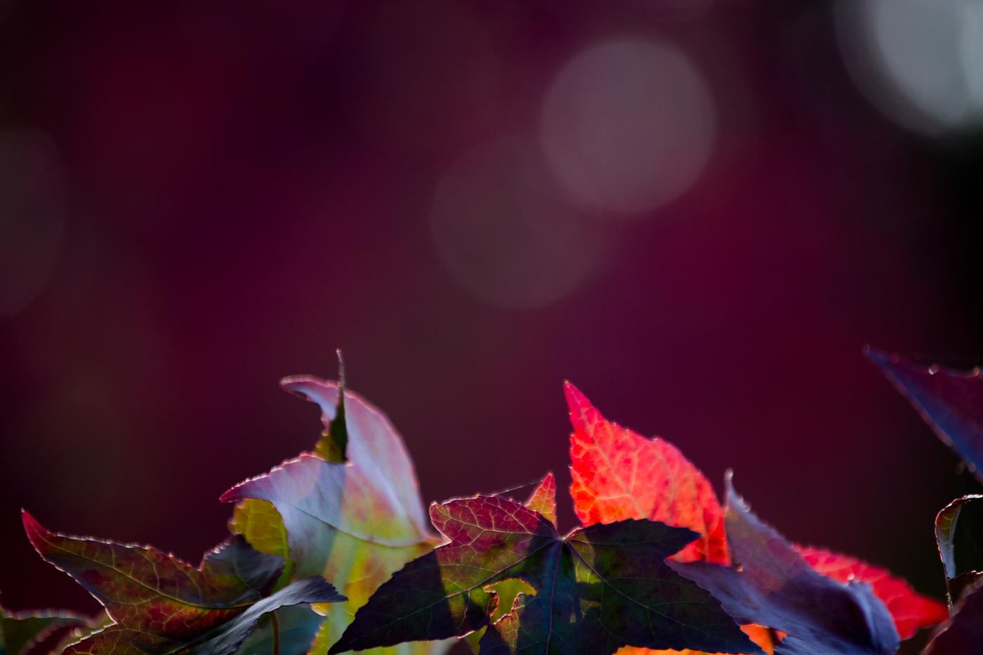 AUTUMN LIGHT SHOW by Rajesh Mehmi.jpg