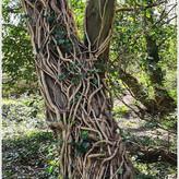 TWISTING TREE By Bushra Sheikh.jpg